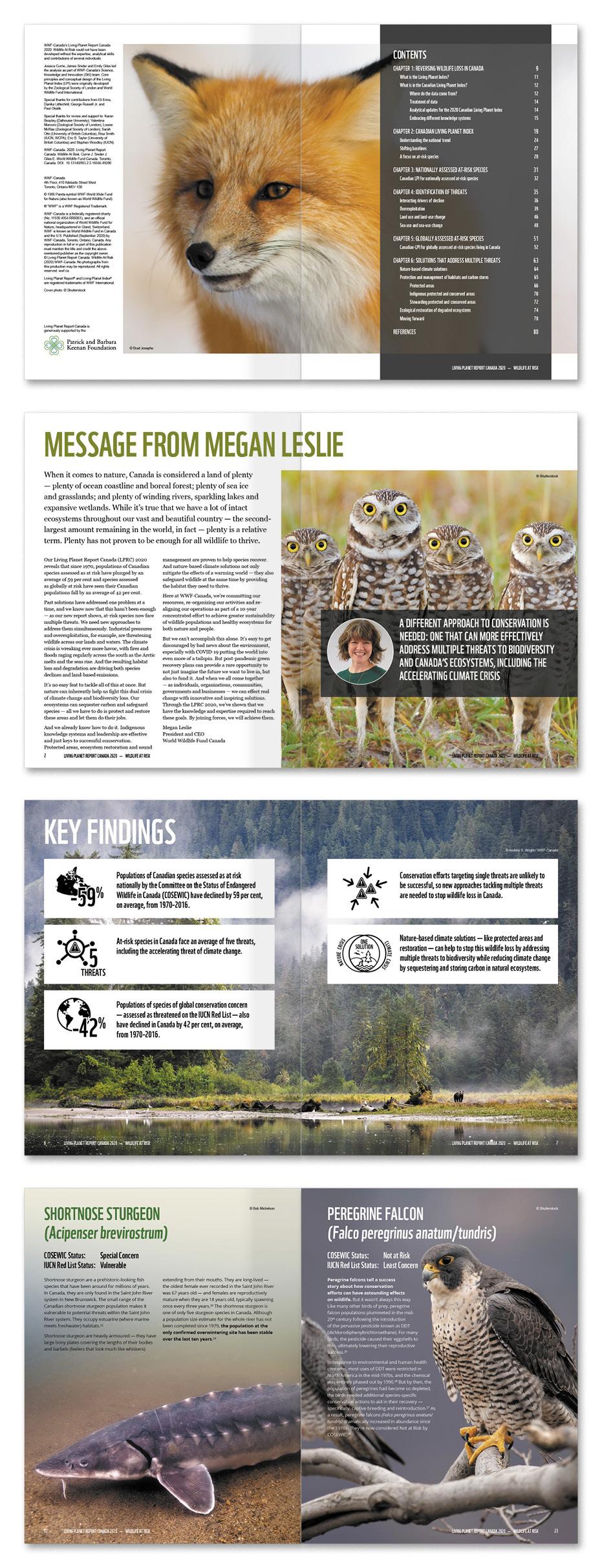 WWF LPRC inside page designs